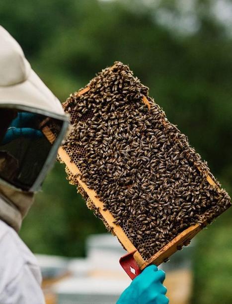 miels des pyrénées 100% français